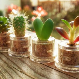 Lot de mini plantes pour mariage - MINICACTUS®