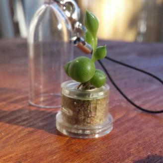 Lot de mini plantes grasses succulentes minicactus pour mariage