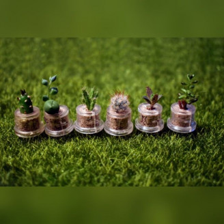 Lot de mini plantes grasses succulentes petit cactus minicactus pour mariage